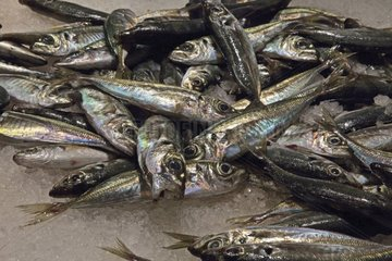 Fishes at the Boqueria Market in Barcelona