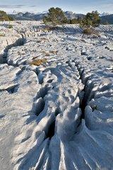 Lapiaz Urgonian limestone massif of the Parmelan Alps France