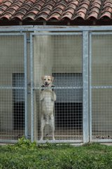 Dog locked in a kennel ASPCA Provence France