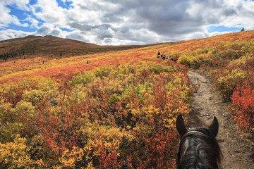 Shipping horse in autumn Yukon Canada