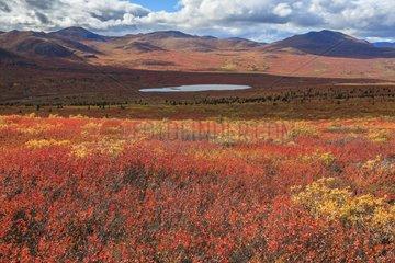 Tundra around Coal Lake in autumn Yukon Canada