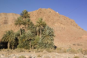 Guard tower and palm trees around Errachidia Morocco