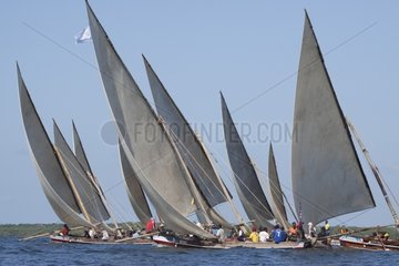 Dhow race Mashua a smaller type of Lamu fishing boat Kenya