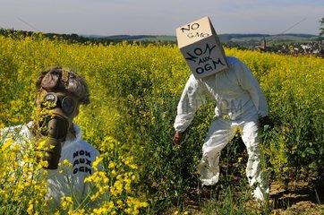 Militant anti GMO rapeseed field PNR Northern Vosges