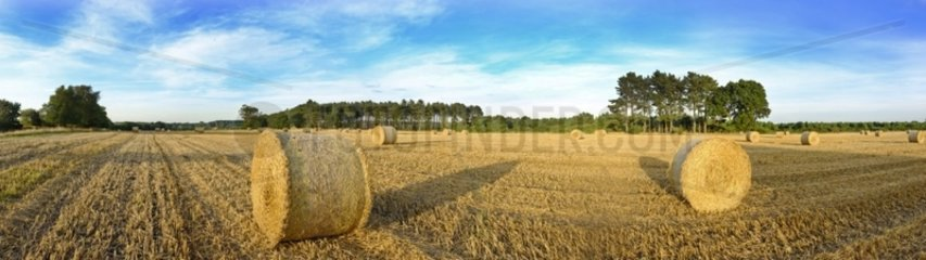 Hay bales in field on a summers evening near Westleton