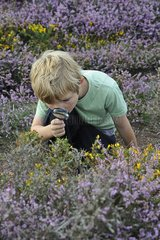 Young boy looking for insects with magnifying glass on heath