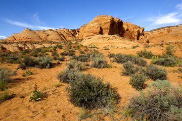 Landscape in the Navajo Reserve near Page USA
