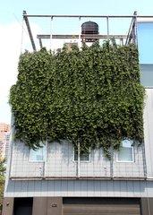 Vertical garden in New York City USA