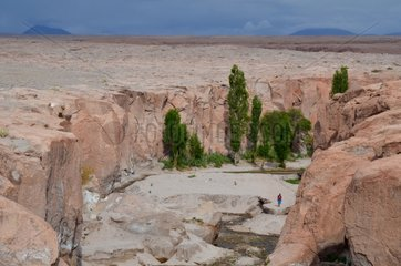 Oasis Toconao Atacama Altiplano Chile