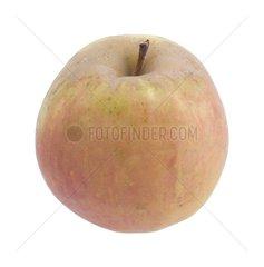Apple 'Sainte Germaine' in studio