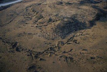 Biotope Aardvark Tussen RN-die-Riviere South Africa