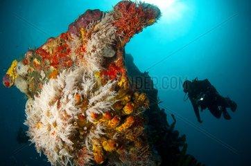 Wreck of Stavronikita Folkestone Marine Park Barbados