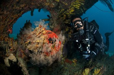 Diver in the wreck of the Pamir Barbados