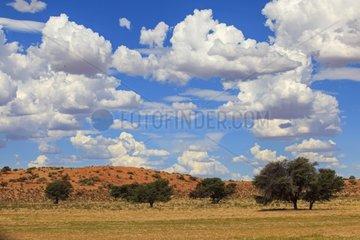 Cumulus humilis above the Kalahari desert Kgalagadi