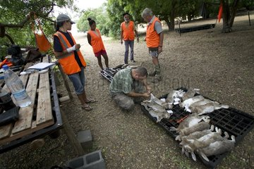 Eradication of rabbits Ilot Lepredour New Caledonia