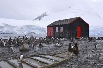 Penguins and hut Port Lockroy Antarctic Peninsula