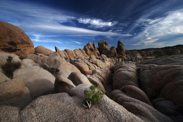 Landscape of Joshua Tree NP in the USA