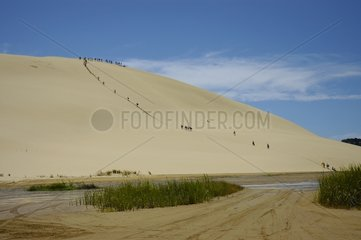 Sand dune of Cape Reinga North Cape New-Zeland
