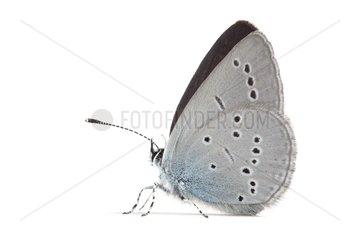 Little Blue on white background