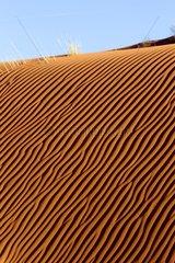 Ripple mark on dune Monument Valley Tribal Park Arizona USA