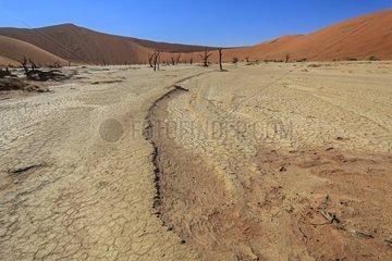 Dry lake Namib Desert Dead Vlei Sossusvlei Namibia