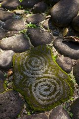 Petroglyphs in a village in pre-Columbian Costa Rica