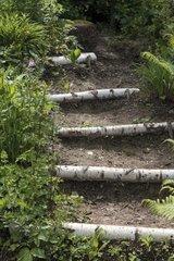 Wooden log stair in a garden