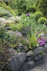 Little flowered garden