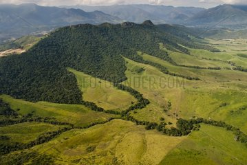 Grazing and dry forest Pic Jacob New Caledonia