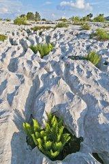 Lapiaz limestone urgoniens Massif Parmelan Alps