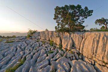 Lapiaz limestone urgoniens Massif Parmelan Alps France