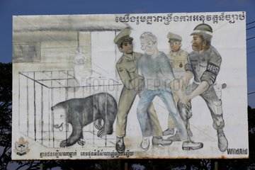 Poster campaign to denounce the bears in captivity Cambodia