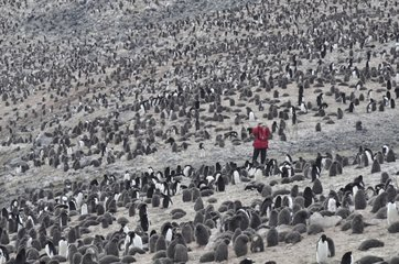 Discovery of a colony of penguins Antarctica Devil Island