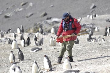 Markup of a colony of penguins Antarctica