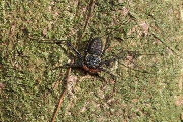 Spider in the Osa Peninsule in Costa Rica