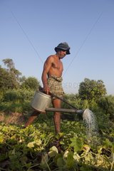 Man watering his vegetables to Cambodia along the Mekong