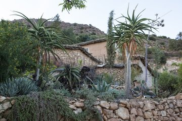 Agaves and aloes in a garden Morocco