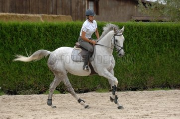 Horse rider on preparing to jump an obstacle