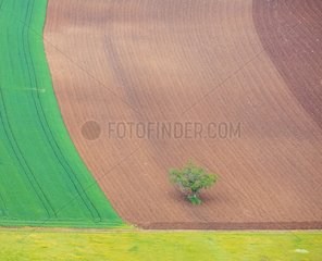 Isolated tree in a field of Dordogne France