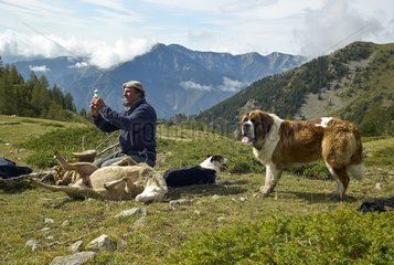 Berger by pricking a sheep - Mercantour France