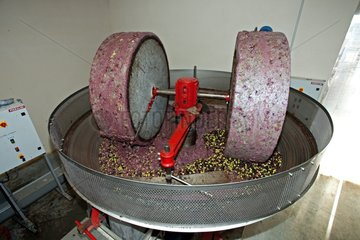 Crushing of Olives to the grindstone France
