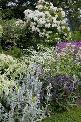 Mixed border in bloom in a garden