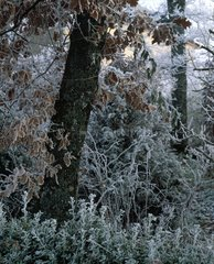 Oak and shrubs in a garden in winter