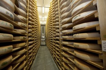 Cave ripening cheese Comté in the Jura France