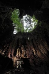 Giant tree stump in the forest on Yakushima Island