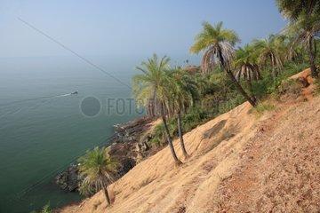 Palm trees on shore slope Gokarna India