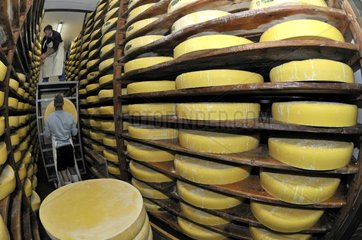 Wheels of cheese Comte AOC in a ripening cave France