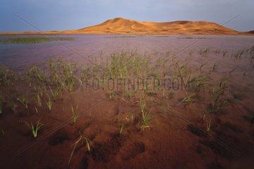 The lake near Errachidia Erg Chebbi in Morocco