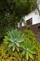 Agriculture Museum El Patio in Tiagua in Lanzarote