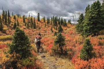 Shipping horse in autumn - Yukon Canada